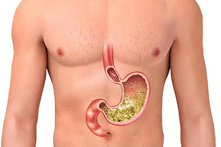 نقش اصلی روده کوچک برای هضم و جذب غذا