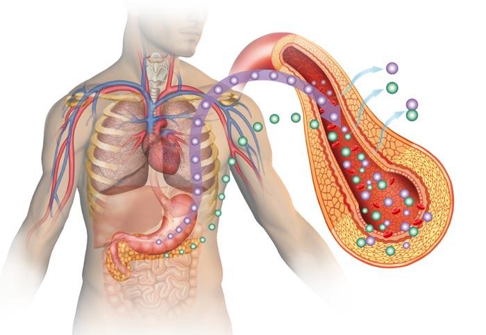 مصرف نوشابهها و نوشیدنیهای رژیمی تا چه میزان در ابتلا به بیماری دیابت نقش دارند؟